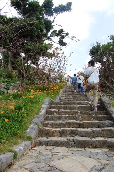 階段脇に咲く秋の忘れ草(沖縄語でクヮンソウ)。見ごろで綺麗でした。