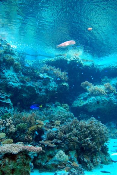 サンゴの海。