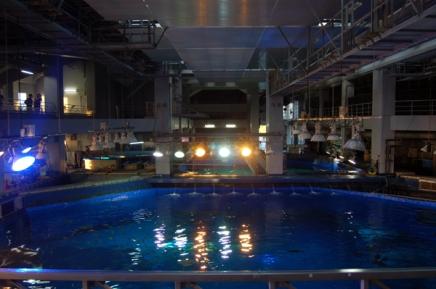 水上観覧コースです。大水槽を上から見学しました。