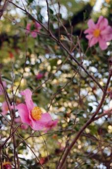 庭園内、花も綺麗でした。