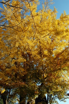 静かな庭園で紅葉を満喫♪