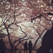本当に綺麗です。ぜひ一度訪れてもらいたいです。
