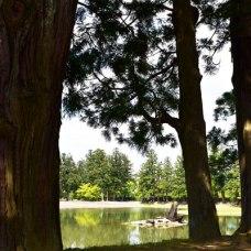 池が見所だそう。ぐるりと周囲を散策できます。