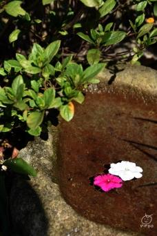 池には金魚もいました。