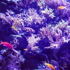 紫と黄色の魚が可愛いと言ってみていました。長男が。