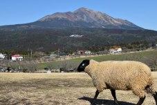 羊は餌持ってると凄い勢いで囲んでくる・・・。ひつじこわい。